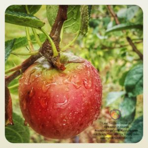 Fall in Georgia means Apple Season! - Just Peachy Keen with the Peachy Queen www.stayinpeachy.com #exploreGeorgiafarms #GAAgritourism